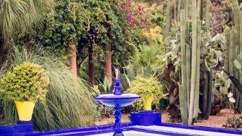 Jardin Majorelly by Yves Saint Laurant - Marrakesch