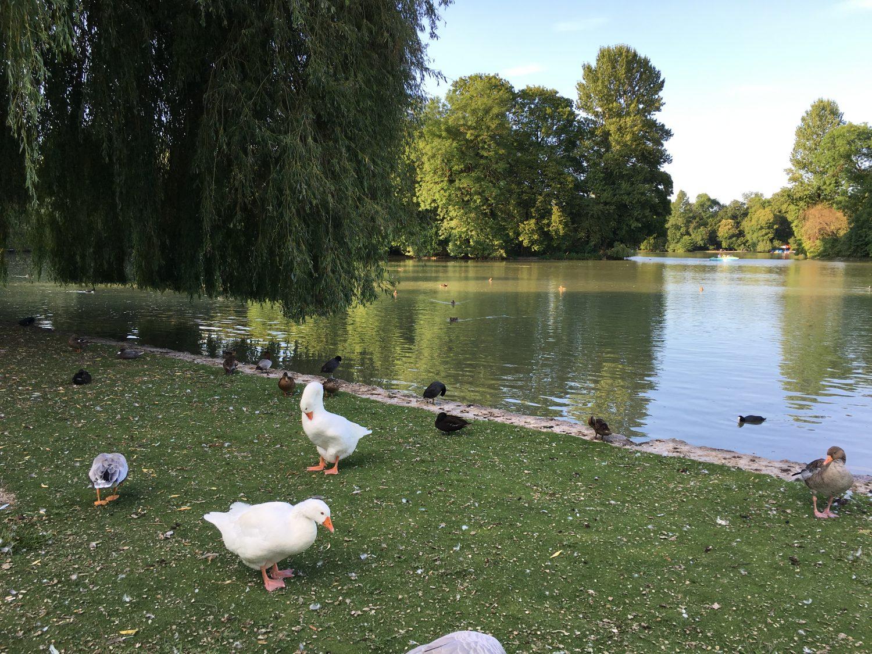 Enten füttern kann man am See genauso gut wie...