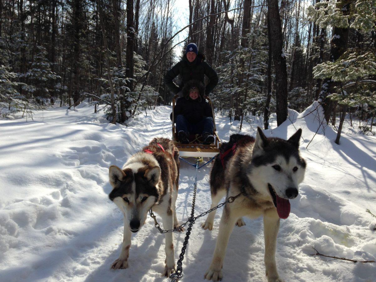 Gemütliche Fahrt mit insgesamt acht Hunden