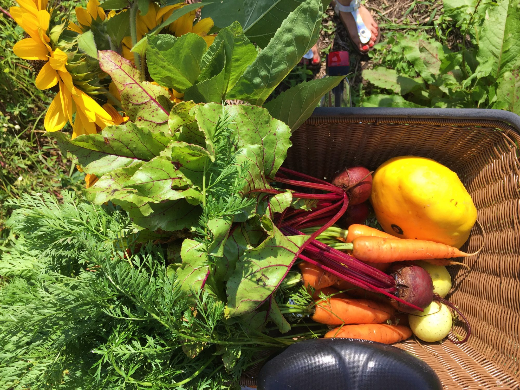 Gemüse im Fahrradkorb