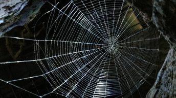 Das Zuhause der Spinnen um Aragog im verbotenen Wald