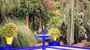 Jardin Majorelly by Yves Saint Laurant - Marrakesch