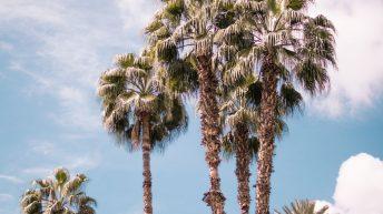 Garten des Hotel La Mamounia - Marrakesch
